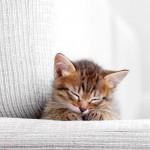 Gatti in casa: 8 consigli per organizzare gli spazi all'arrivo di un cucciolo