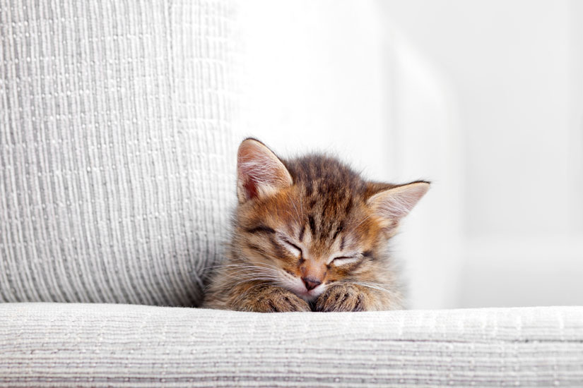 Gatti in casa 8 consigli per organizzare gli spazi all - Organizzare la casa ...