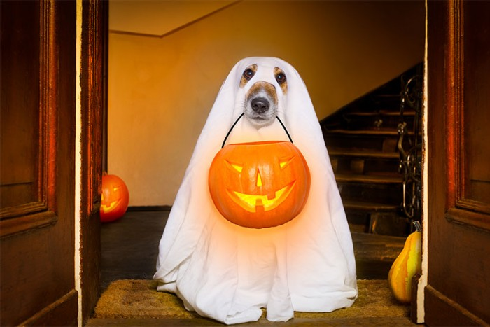 costumi_halloween_fantasma