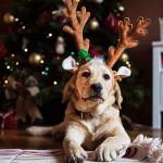 Natale nel mondo: 5 usanze che non conosci, da rimanere a bocca aperta!