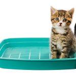 Pipì di gatto, sudore e altro: stop ai cattivi odori sul tuo bucato!